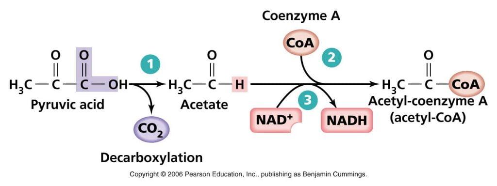 reaksi dekarboksilasi oksidatif
